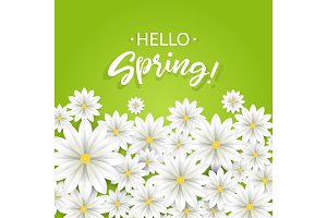 Hello Spring.Hand lettering with white flowers border.Paper chamomile on green background. Vector illustration.