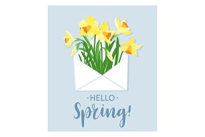 Hello Spring. Yellow daffodils in white envelope and lettering postcard. Spring flowers greeting, invitation, greeting flyer. Vector illustration.
