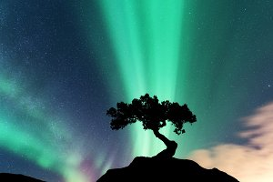 Aurora borealis and silhouette of a