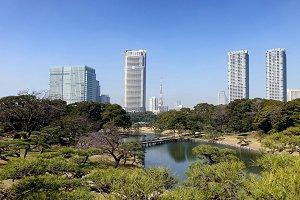 Nature in Tokyo Japan