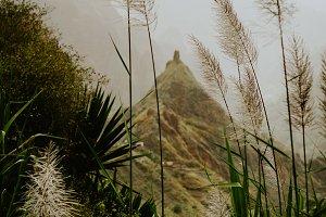 Sugarcane plantation growing on the way of trekking route 202 via Xo-Xo valley to Ribeira Grande. Santo Antao island, Cape Verde
