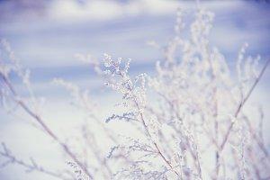 Winter tenderness.