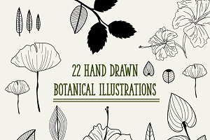 Hand Drawn Botanical Illustrations