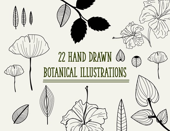 Hand Drawn Botanical Illustrations