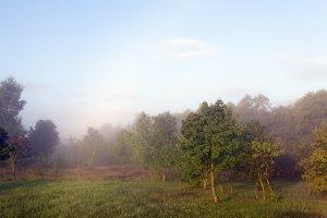 landscape with misty