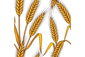 Seamless pattern abstract with wheat