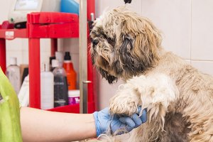 cutting a dog's hair at the dog hair