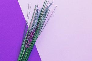flowers on purple background