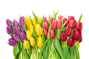 Spring flowers Fresh tulips