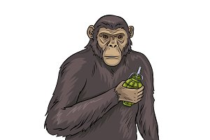 Monkey with grenade pop art vector illustration