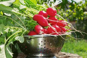 Fresh radishes two with tops on a wo