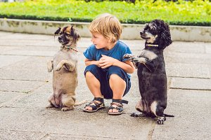 A little boy is playing with little dogs