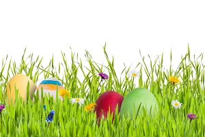 Eggs in grass isolated