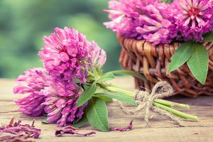 Bunch of clover, basket of flowers.