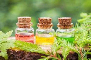 Bottles of essential oil on stump.