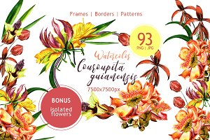 Couroupita guianensis PNG watercolor