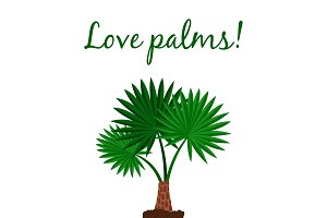 Washingtonia palm tree poster