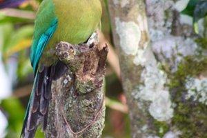 Bright Tropical Bird, Panama