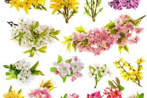 Flowers apple tree cherry twigs