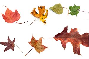 14+ 'Autumn Leaves JPEG' Photos