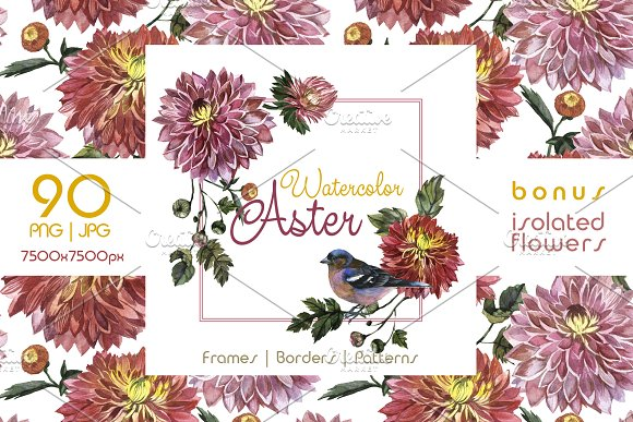 Charming Asters PNG Watercolor Set