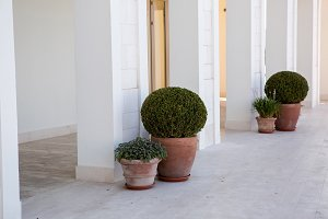 green bushes are in pots on the street