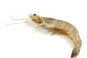 Fresh raw seafood shrimp