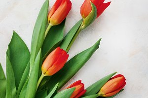 Red-yellow tulips on a light backgro