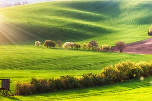 Fields and blooming trees