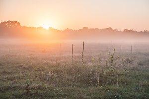 Early morninig on meadow