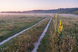 Morninig on meadow