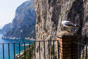 A seagull bird sits on a balcony against the background of the sea and rocks - a travel or natural background.