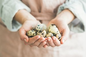 Natural Quail eggs and feather in woman's hands for Easter