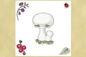 Champignon mushroom illustration.