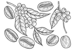 Coffee branch illustration