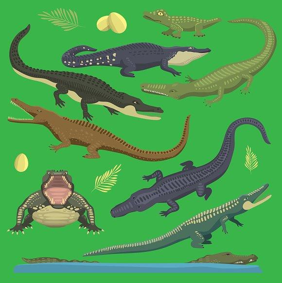 Crocodile Alligator Green Reptile