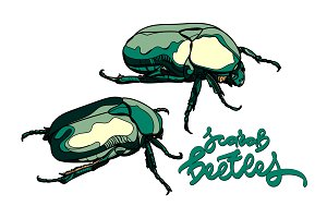 Scarab beetles vector collection