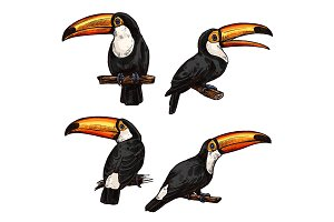 Set of exotic bird toucan