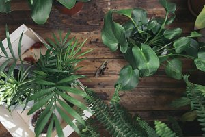 Plants that purify  home environment