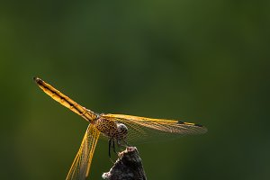 Dragonfly in Taipei, Taiwan.