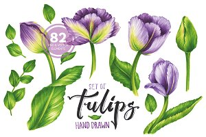 Vector Set Of Violet Tulips