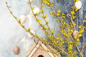 Forsythia spring flowers Easter eggs