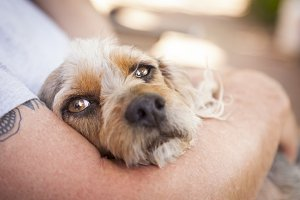 Cute Terrier Dog in Master's Arms