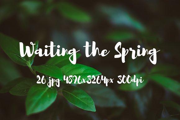 Waiting Spring