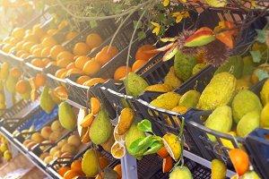 Sicilian citrus