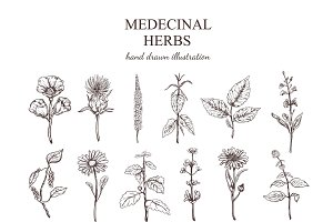 Hand Drawn Medical Herbs Collection