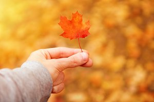 small red maple leaf