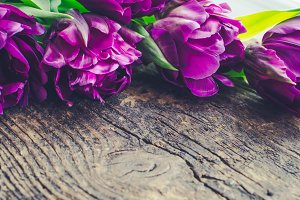 Purple tulips on wooden background