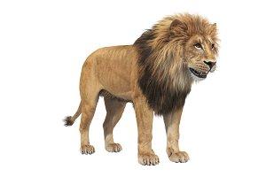 Lion wild african feline