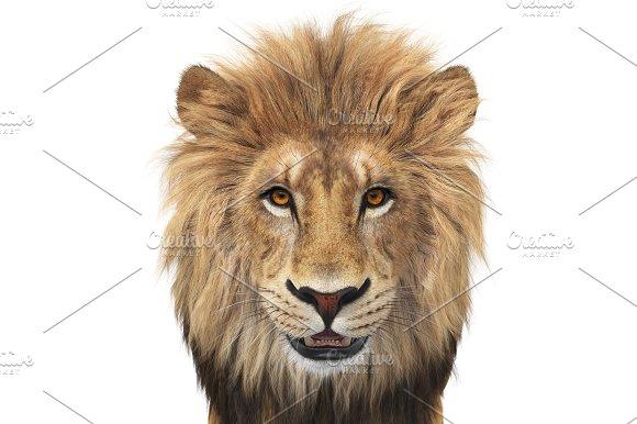 Lion Animal Wild Beige And Orange Close View
